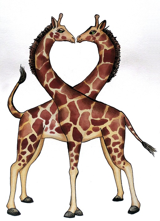 Free Photo Giraffe Heart Love Animals Free Image On