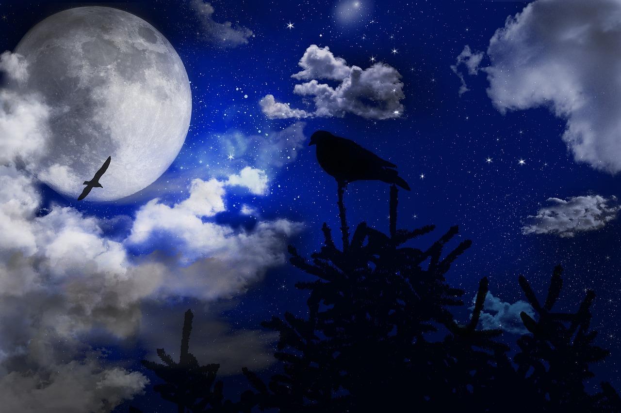 картинки полет лунное небо ночь любят практически