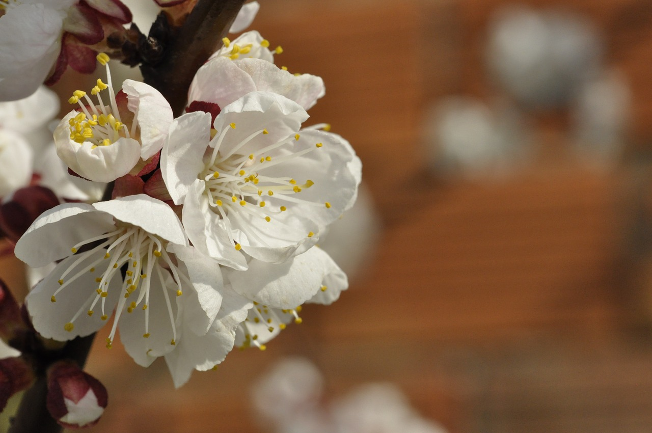 Белые цветы картинки на рабочий стол замок