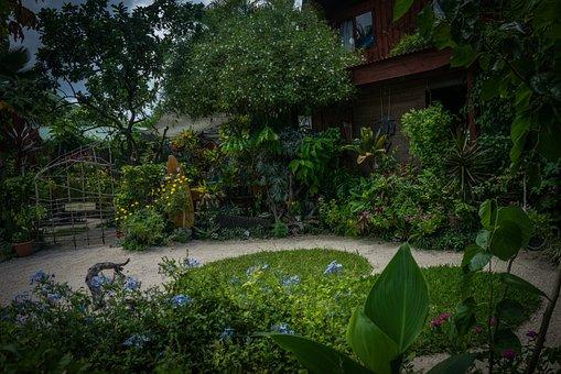Bora Bora, Giardino, Natura, Verde