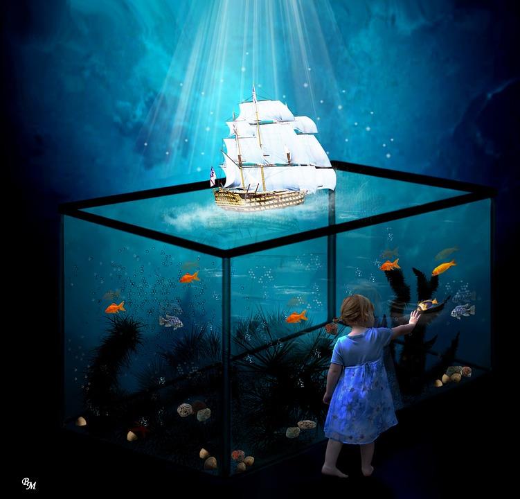 Aquarium fische wasser kostenloses bild auf pixabay for Fische aquarium
