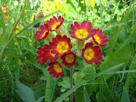 バラの花が, 花, 工場, 初夏, 黄色, 赤, 自然