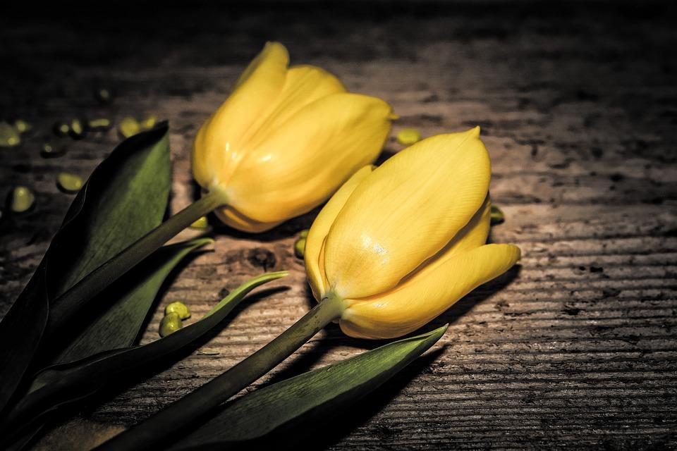 Bunga Tulip Potong Foto Gratis Di Pixabay