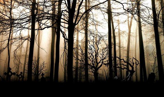 Forest, Dark, Fog, Gloomy, Mystical
