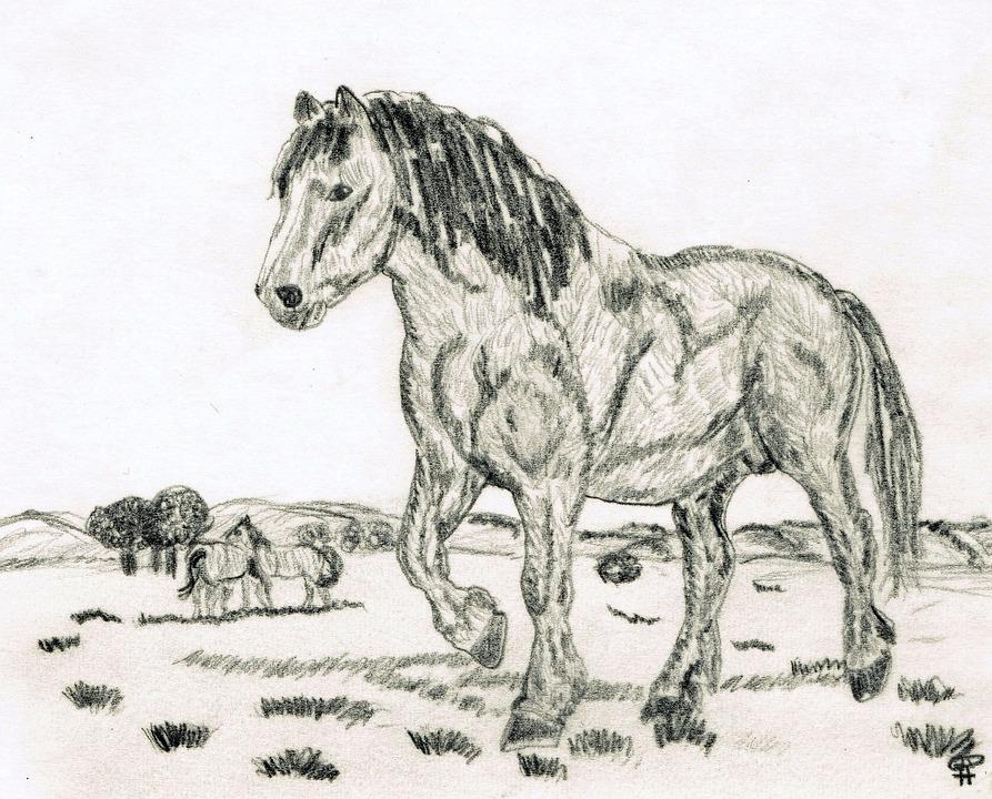 desenho a lápis cavalo foto gratuita no pixabay