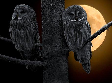 Eule, Kauz, Nachtvogel, Bartkauz, Vogel