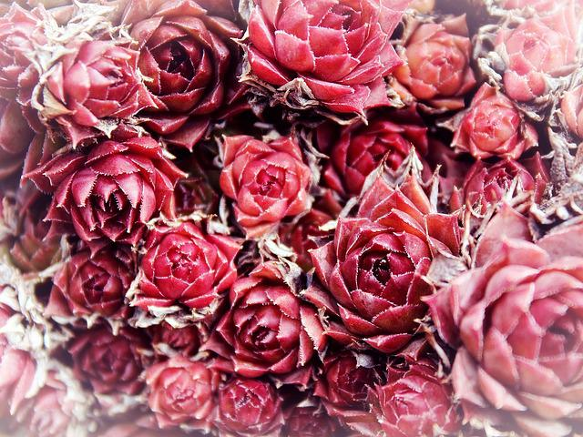 Free Photo: Roses, Flowers, Background, Red
