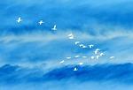 birds, in, flight