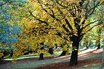 autumn, fall, nature