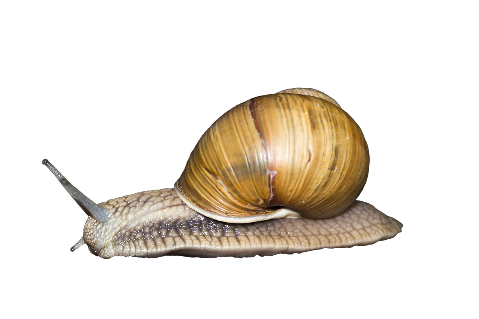 free illustration animal  reptile  creature  shell free image on pixabay 708246 sea creature clipart free sea creatures clip art black and white