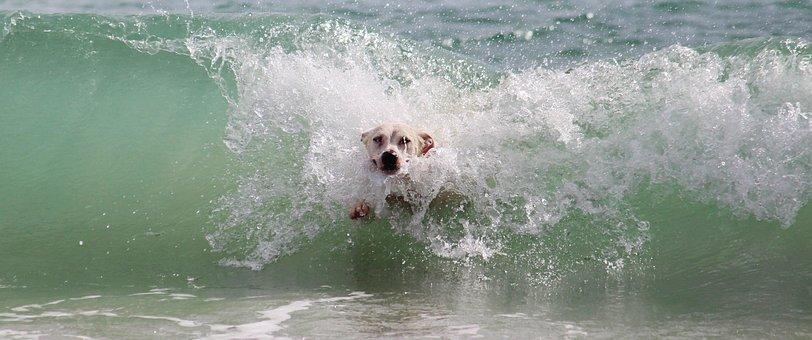 Pies, Fala, Surf, Wody, Plaży, Grać