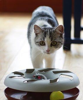 Cat, Small, Toys, Domestic Cat, Pet