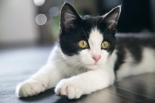 líbání černá kočička