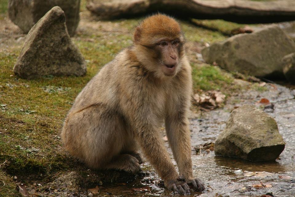 monkey emotions free images on pixabay