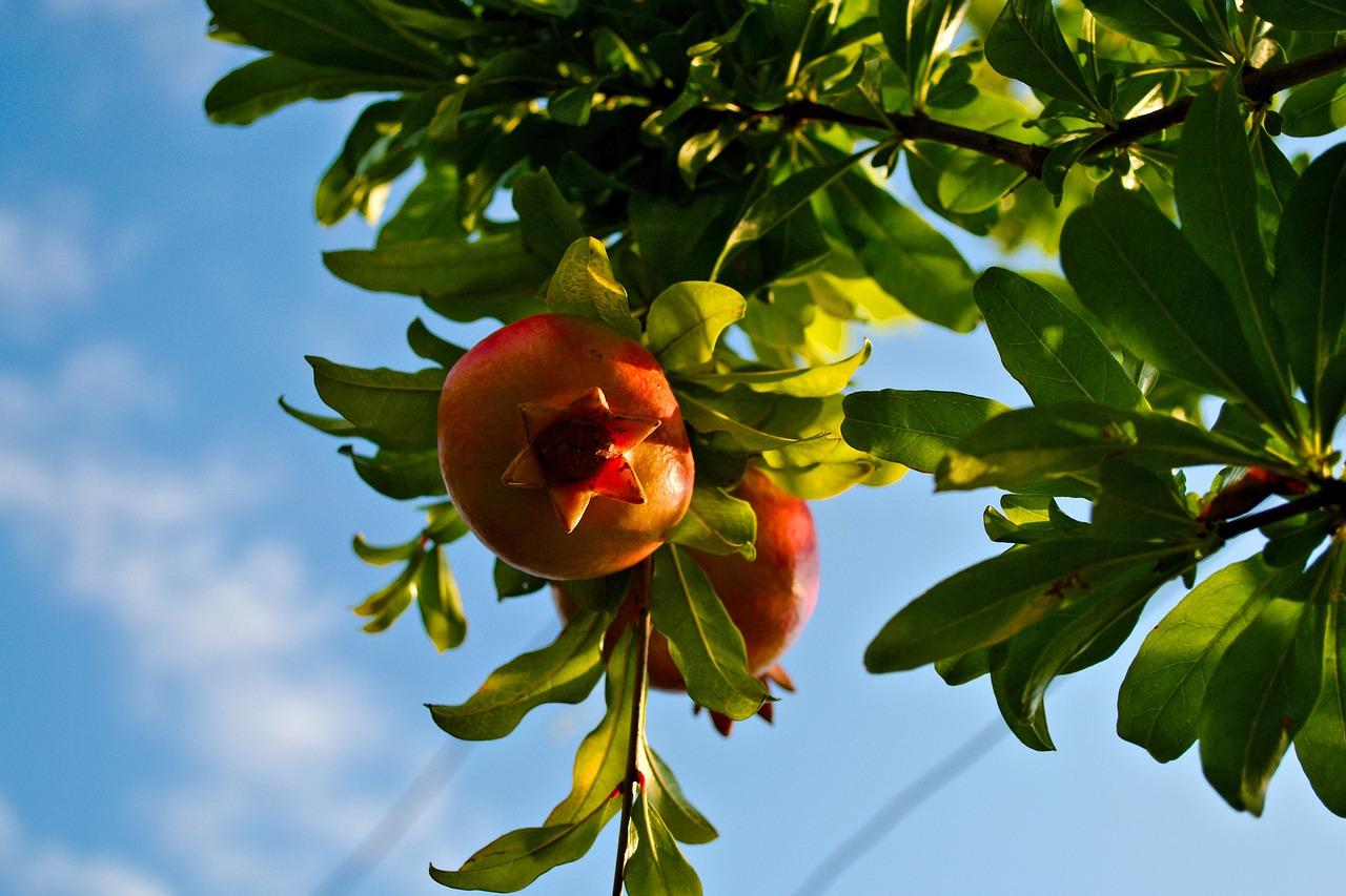 картинка плоды и цветы на одном дереве цены оаэ