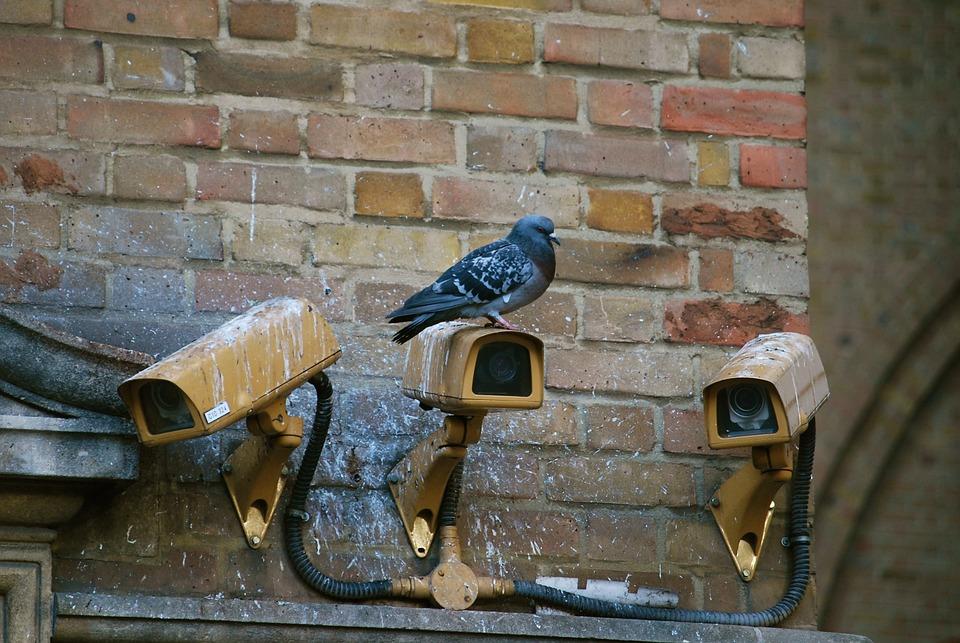 Camera, Spy, Pigeon, Surveillance, Security, Video