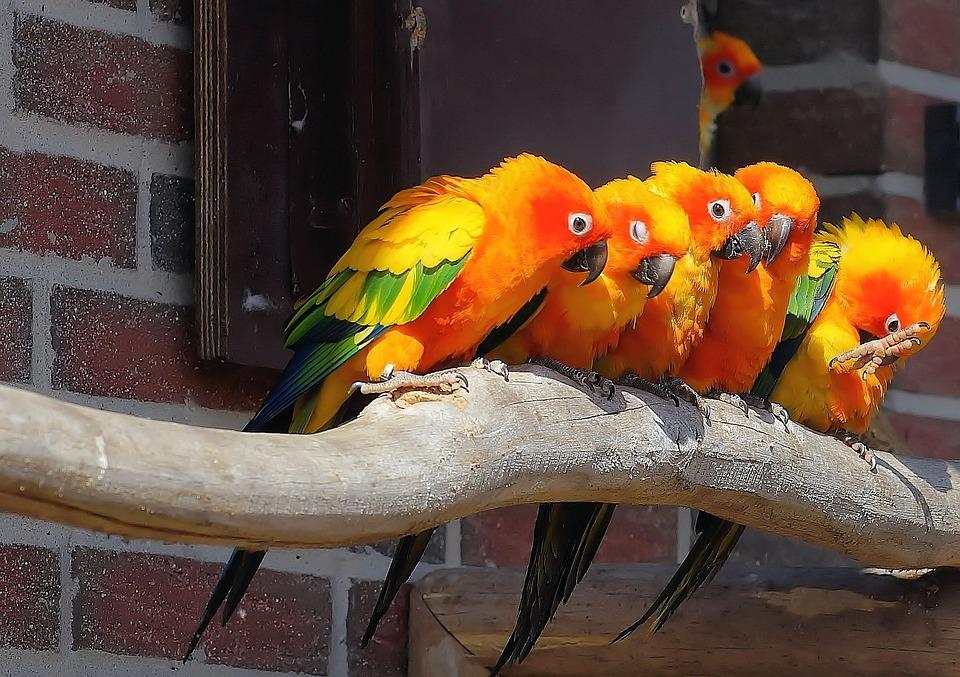 صورة لمجموعه من البغبغانات الملونة واقفون فوق جزع شجرة