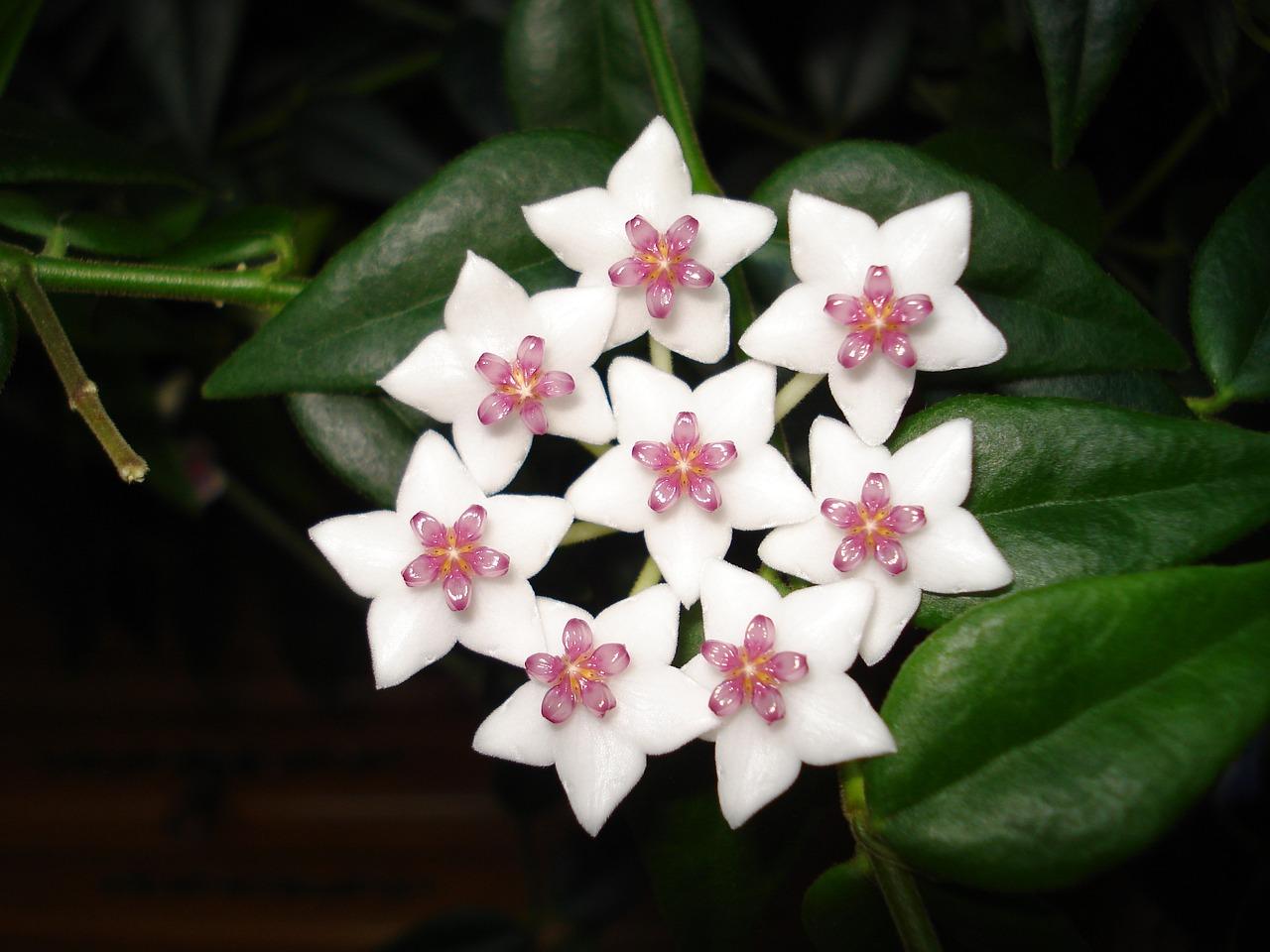 цветы восковые фото всего поражаются легкие