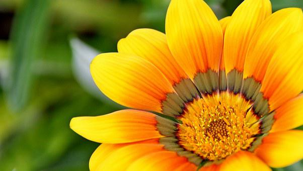 Yellow flowers images pixabay download free pictures yellow natural flower blossom mightylinksfo