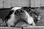 dog-715545_150.jpg