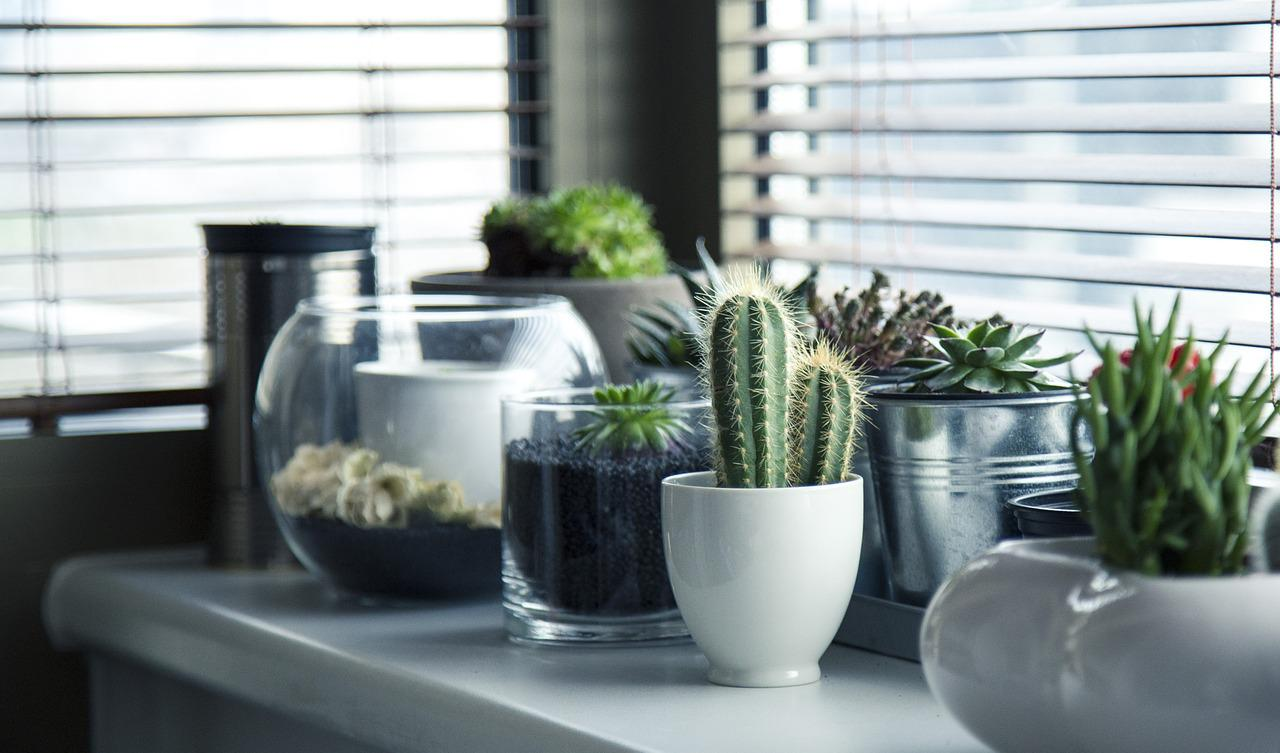Important Tips for Happy and Healthy Succulents