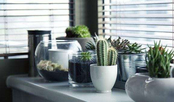 Pots Plants Cactus Succulent Shelf Window