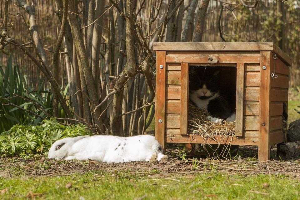 Kaninchen Garten Frühling Kostenloses Foto Auf Pixabay