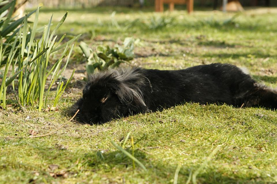 Kaninchen Hase Garten Kostenloses Foto Auf Pixabay