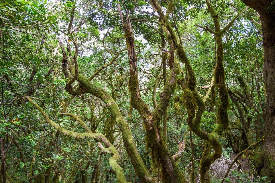Parques Patrimonio de la Humanidad en España, Parque Nacional De Garajonay