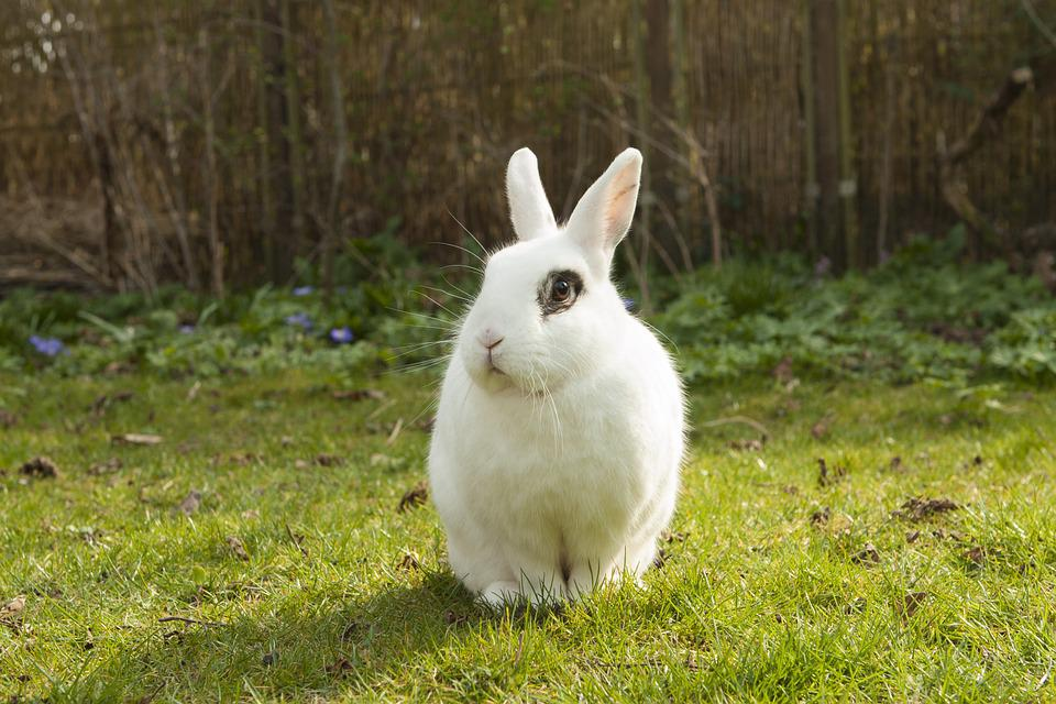 Rabbit, Bunny, Spring, Garden, Pet