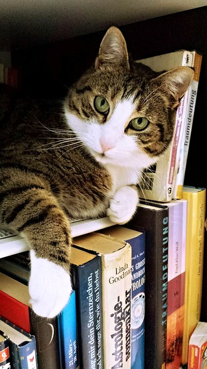 Cat Tamara Fur - Free photo on Pixabay