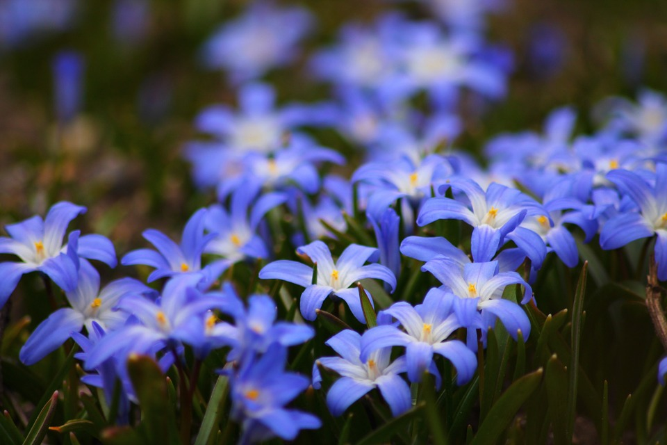 Free Photo: Flowers, Blue, Beautiful, Garden - Free Image On