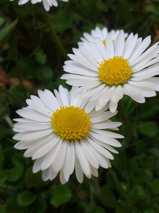 vit och gul blomma
