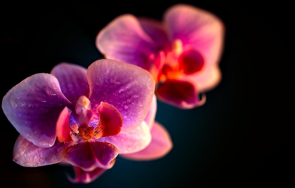 Photo Gratuite Fleur Orkide Plante En Pot Image