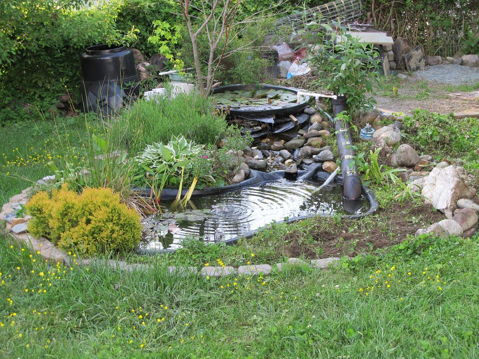 Free photo pond backyard garden water free image on for Green water in pond