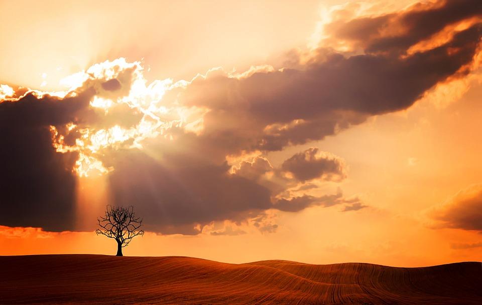 paysage arbre nature ciel nuages lumire du soleil - Arbre Ciel