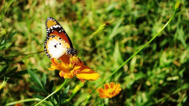 Sierra Leone Butterfly Insect Africa Flowe