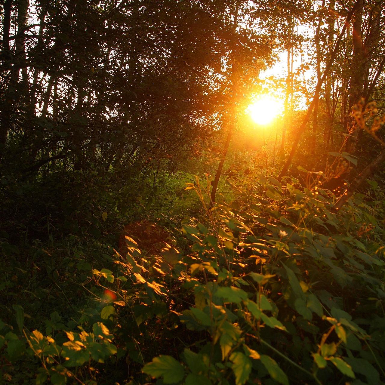 фото на заходящем солнце