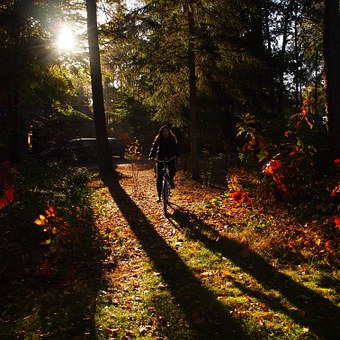 Girl, Morning, Forest, Cycling, Autumn