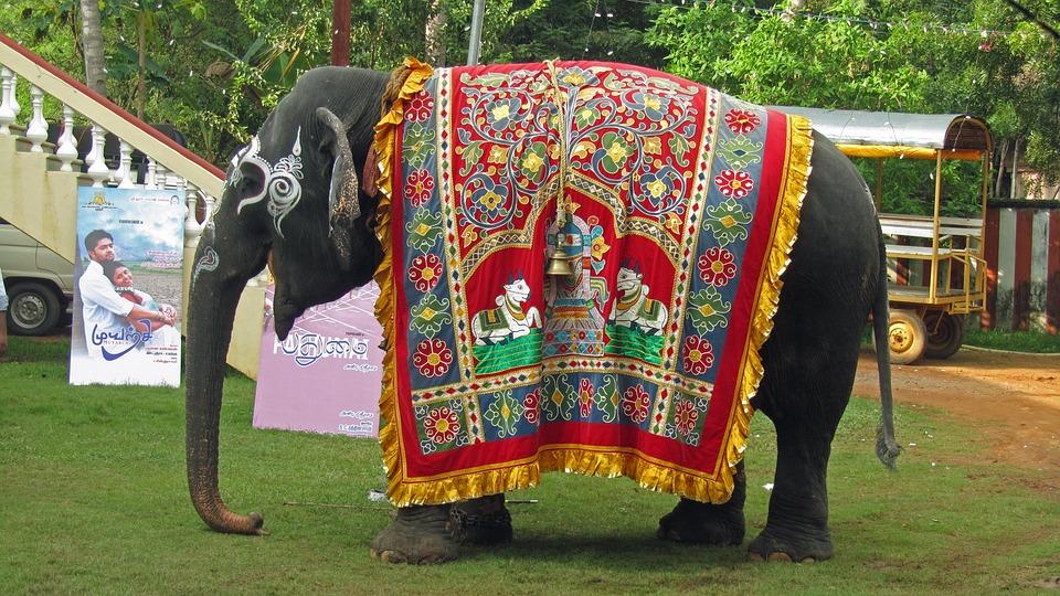 Photo gratuite l phant de temple l 39 inde image gratuite sur pixabay 724754 - Photos d elephants gratuites ...