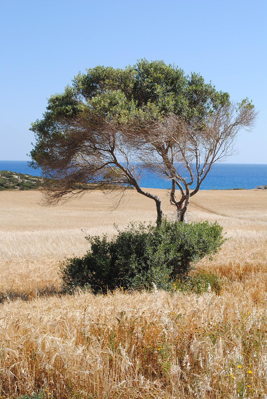 Oak tree disease pictures