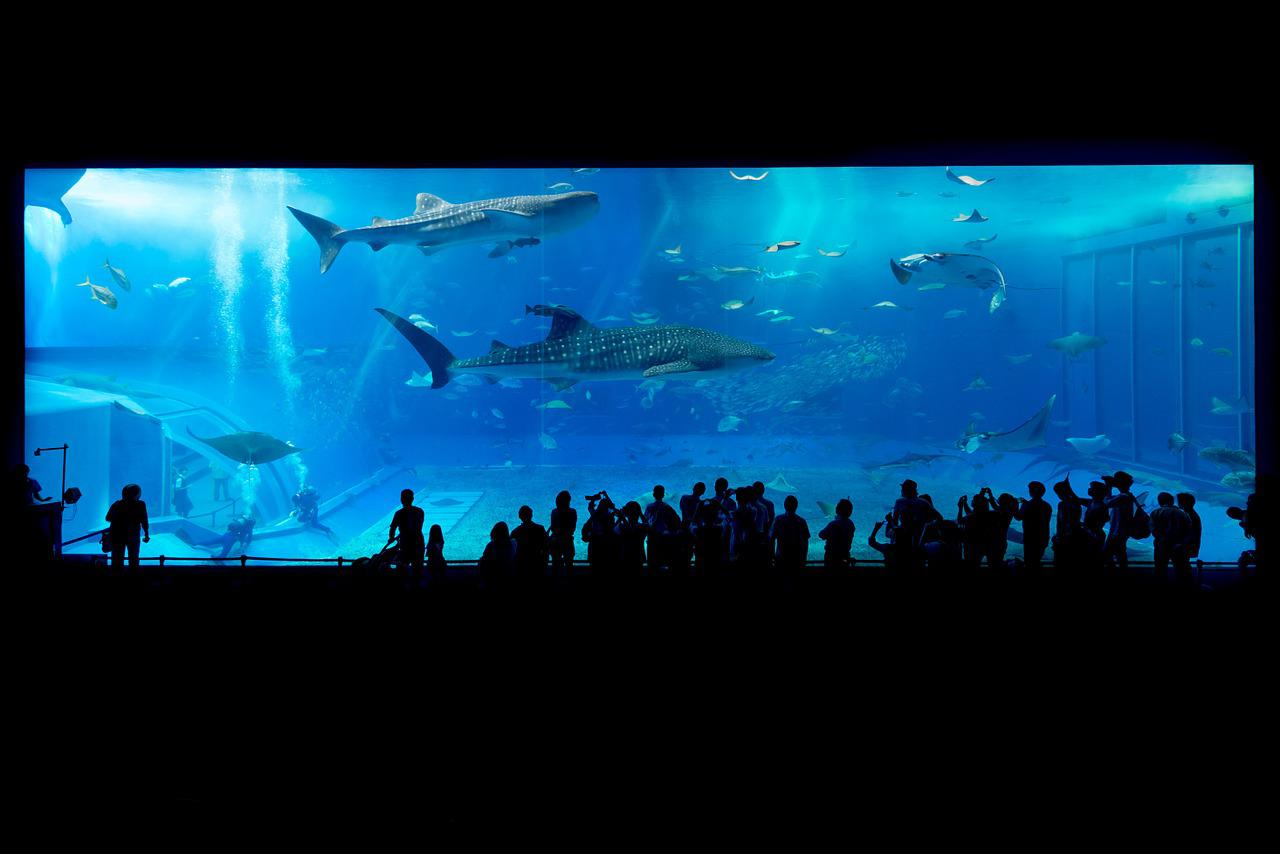 水族馆,鲨鱼,冲绳,日本,鱼,水,水下,动物,游泳,生活,海,蓝色,自然,透明,人,玻璃,玻璃,海洋,成功