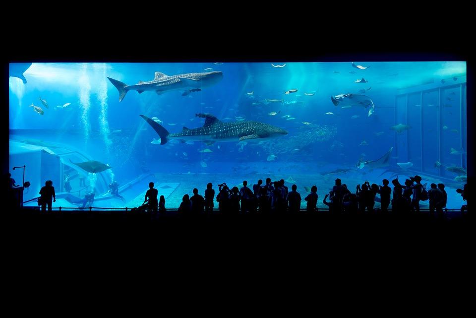 水族館, サメ, 沖縄, 日本, 魚, 水, 水中, 動物, 水泳, 生活, 海, 青, 自然, 透明, 人