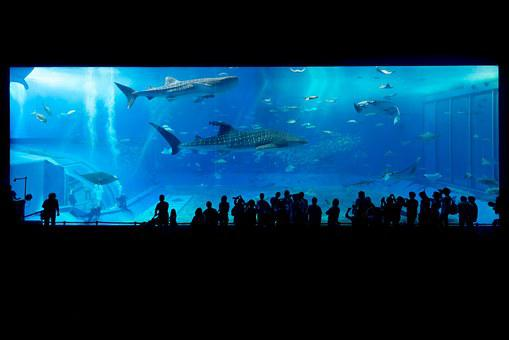 Aquarium, Shark, Okinawa, Japan, Fish