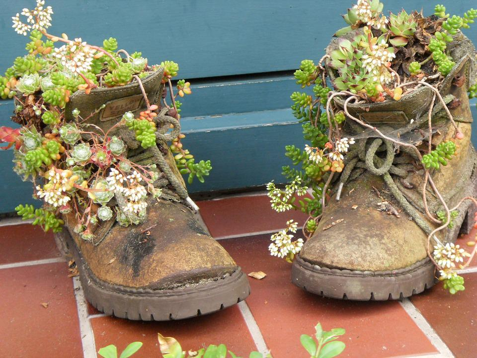 цветок в ботинке фото тоже