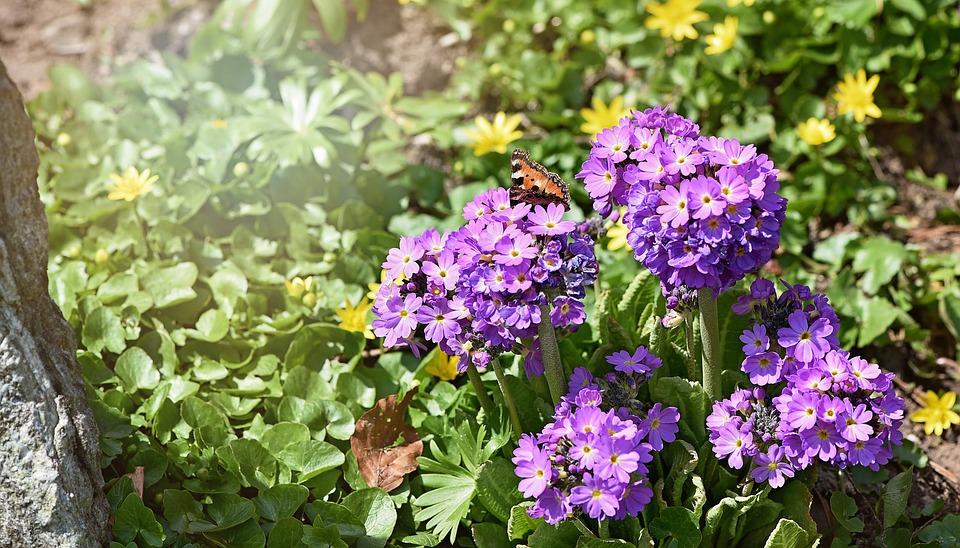 Photo gratuite fleurs jardin printemps pilon image for Fleurs jardin printemps