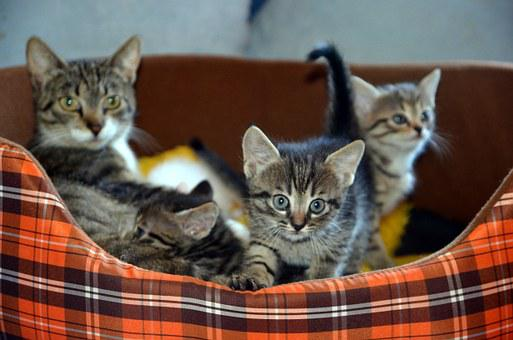 Cat, Family, Pet, Love, Happy, Animal