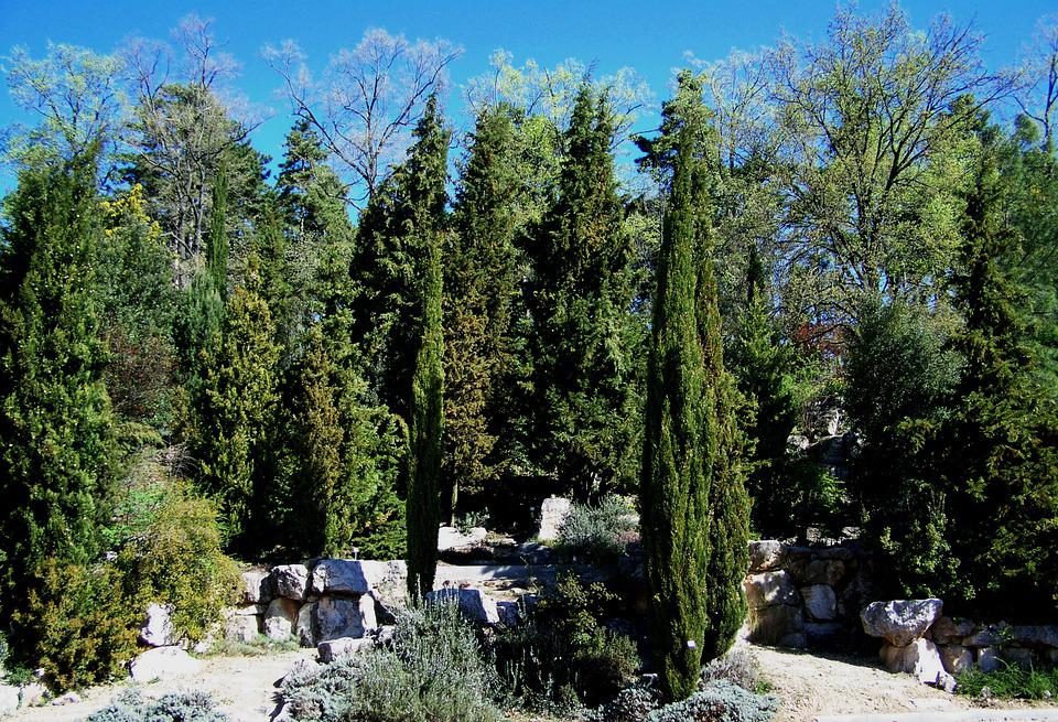 Free photo evergreens rocks pecs free image on - Arboles de jardin de hoja perenne ...