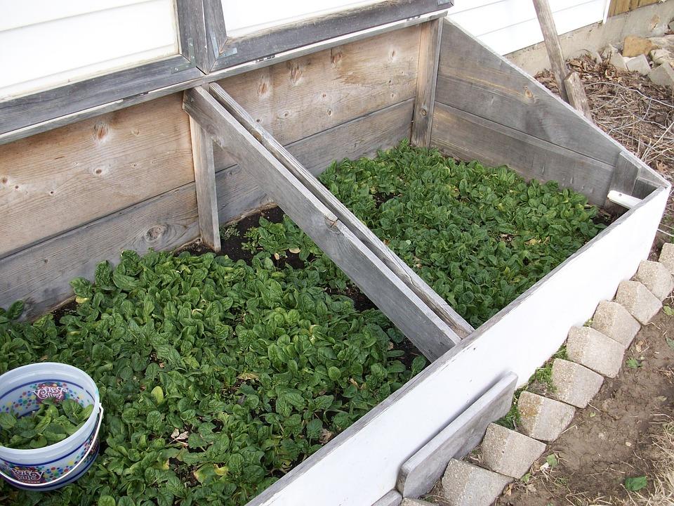 Spinat, Gartenarbeit, Natürliche