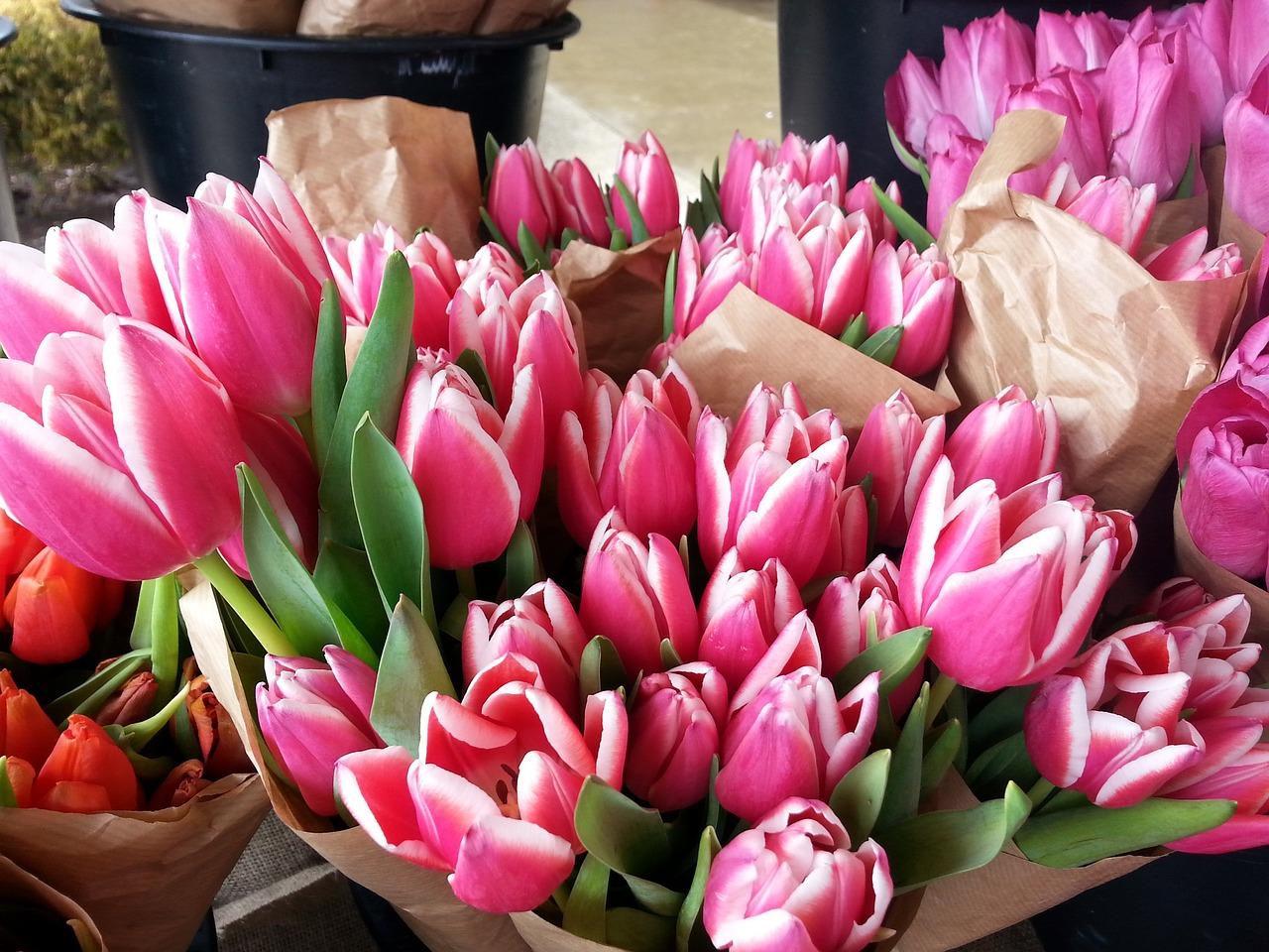 букеты розовых тюльпанов фото живущую пятый год